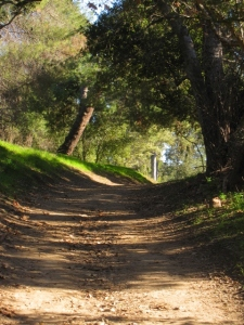 The adventure begins: the Santiago Creek Trail is a tunnel of oak loveliness on a winter afternoon after rain.