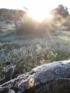 Frosty sunrise in Black Star Canyon
