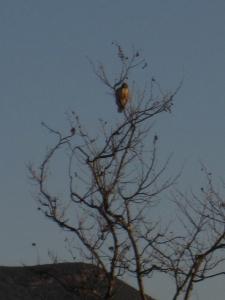 De-frosting hawk