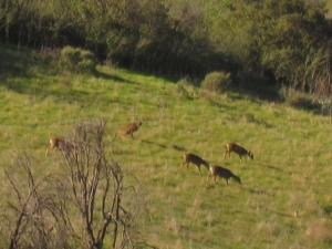 Mule deer on the move.