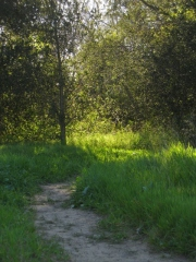 Where the trail leads: to oaks and sunshine . . .