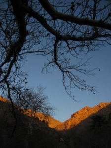 The just-budding sycamore in the canyon were a cool desert surprise.