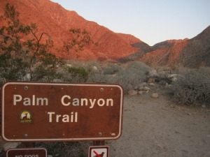 The next couple of days we camped at Palm Canyon--fifty years after my first visit, it's still a magical place.