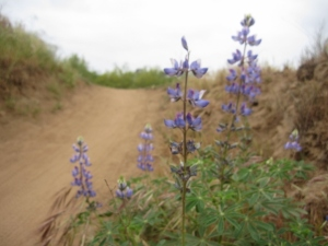 Lively lupine