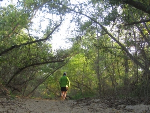 Running through the Willows a week ago. The trail made me do it . . . how can you not run and run through here . . .