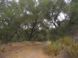 Oak groves line the road; it's a peaceful, bird-filled place . . . if you can ignore the occasional landfill noise.