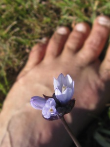 Wild hyacinth and bare feet