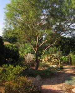 Manzanita (lower left); desert willow (center).
