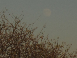 The almost-full moon of a few days ago