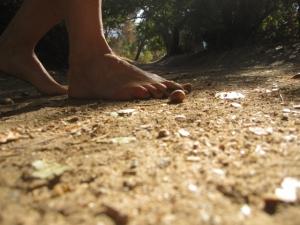 Coast live oak acorn along the trail