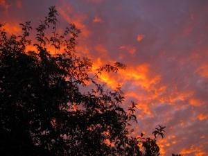 Mexican elderberry at sunrise
