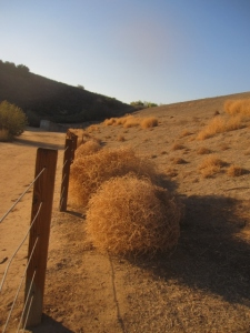 "Then the sun came out for a few days. I remember making ""snowmen"" out of tumbleweeds like these when I was a kid."