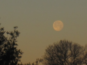 Moonset at dawn.