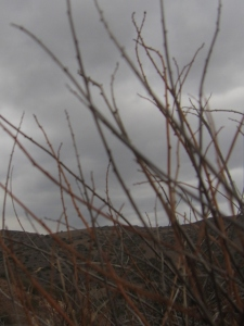 Before the rain: all the coastal sage scrub community drops its leaves and goes drought-deciduous.