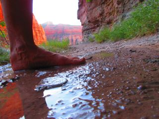 After three dry winters, there are fewer seeps along the trail; this one is still refreshingly wet.