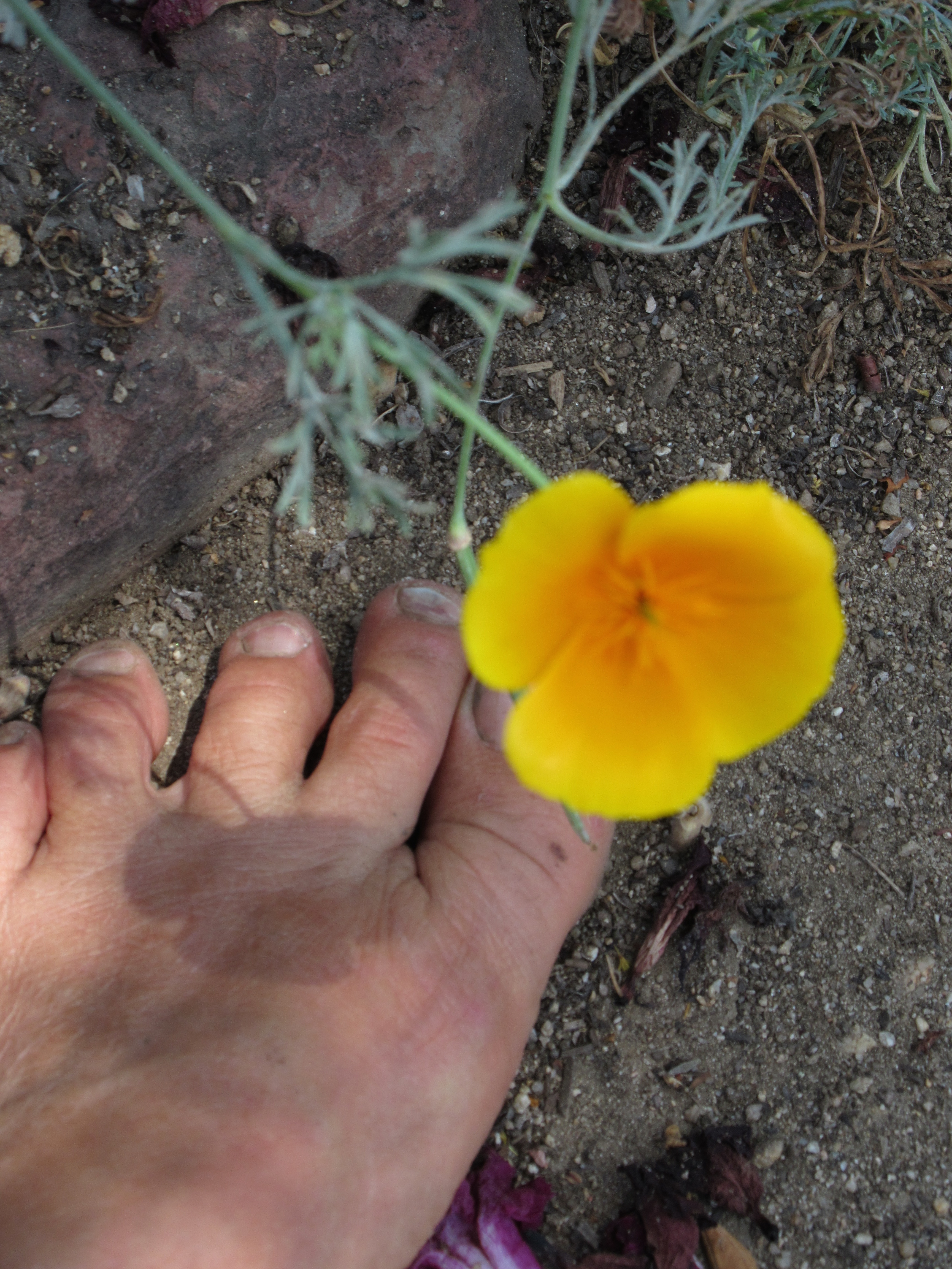 my ldquo joys of barefoot trail running rdquo essay just posted on barefoot happy poppy trails