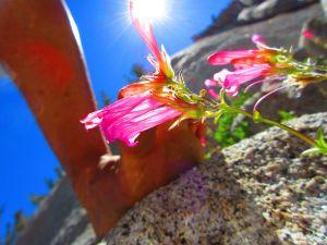 Wild! Flowers!