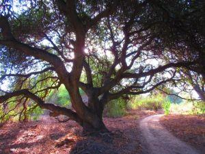 oak at temecula creek