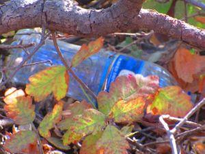 trash in poison oak