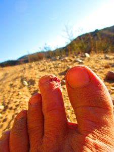 My #2 toes hang out past the big toe, resulting in  occasional stubs like this one last week.  They throb and bleed for a bit, clog up with dust, and heal pretty quick . . . a small price to pay for the hours and miles of shoe-less trail fun.