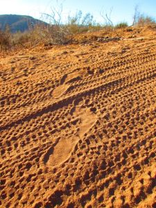 This blog has a fan who appreciates my obsession with bare footprint photos; this one's for you, friend :)