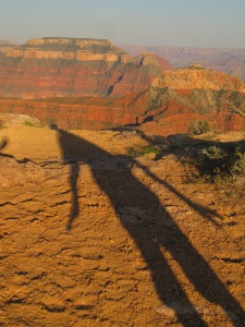 Canyon shadow friend.