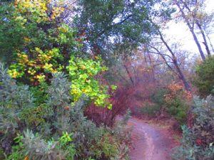Path at Irvine Park