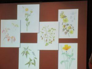 Botanical illustration workshop examples.