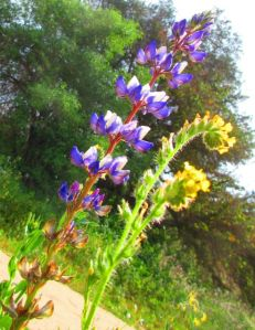 Two common wildflowers looking uncommonly fabulous as a pair.