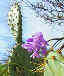 Our Orange County wildflowers know how to get along with their prickly neighbors. So should we . . .