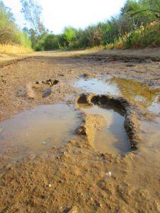 barefoot mudprint