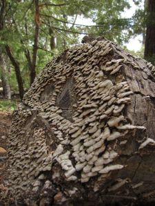 Fungi North Rim