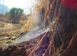 Every twist and turn of the trail led to morning glory--here an intricate spider web.