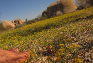 barefoot at Joshua Tree National Park