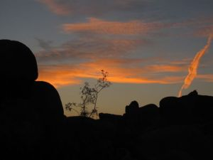 morning at Joshua Tree National Park