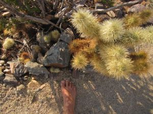 barefoot with cholla