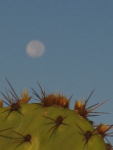 prickly pear and full moon