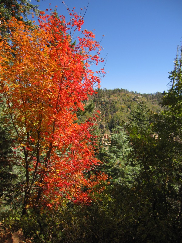 fall color on the North Kaibab Trail