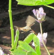 moth paused