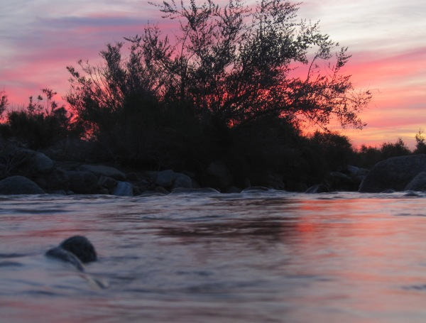 Palm Canyon flowing at dawn Feb 2019 ABDSP