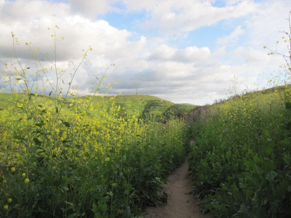 tunnels of horrible nasty invasive mustard