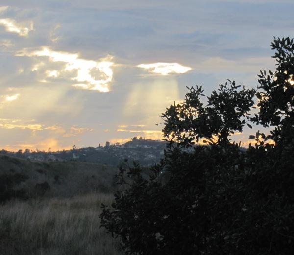 sun rays and oak