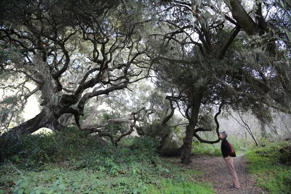 Thea under oak Coon creek